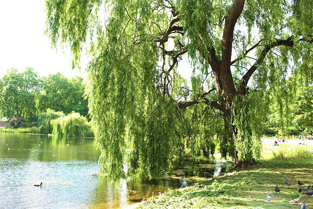 St James's Park   1 Day in London Walking Itinerary