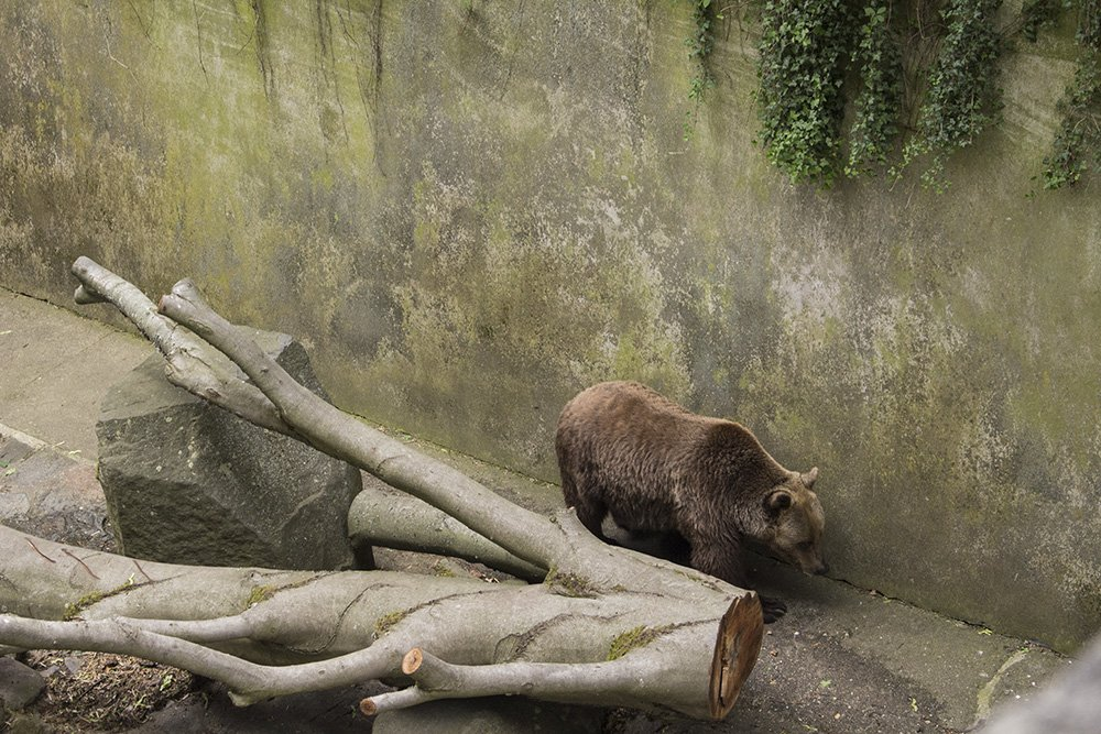 A day trip from Prague to Cesky Krumlov Castle | Bear in the moat of Cesky Krumlov Castle
