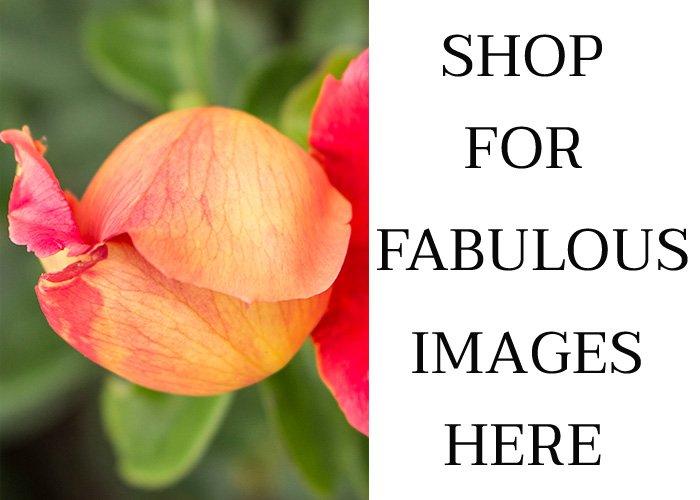 Flower images for sale