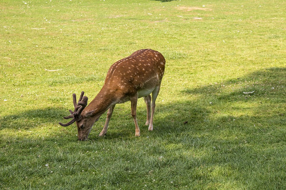 Czech Republic: Visiting Kromeriz Castle and Gardens from Brno | Deer in the chateau gardens