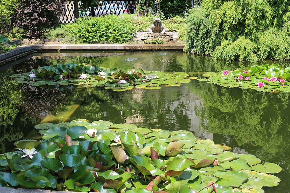 Things to do in Brno, Czech Republic, in 1 day | Pond in the Botanical Gardens