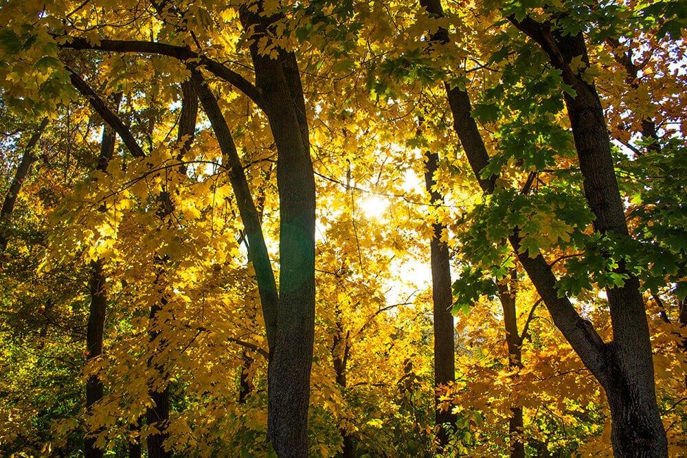 Riscani Forest in Chisinau, Moldova
